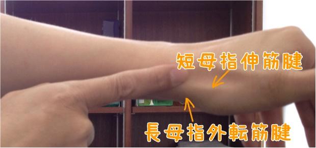 短母指伸筋腱、長母指外転筋腱