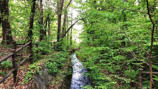 円山麓の川2
